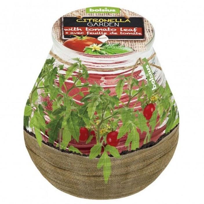 Bolsius Gegeurd Patiolight Citronella/tomatenblad
